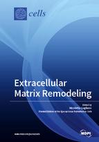 Extracellular Matrix Remodeling