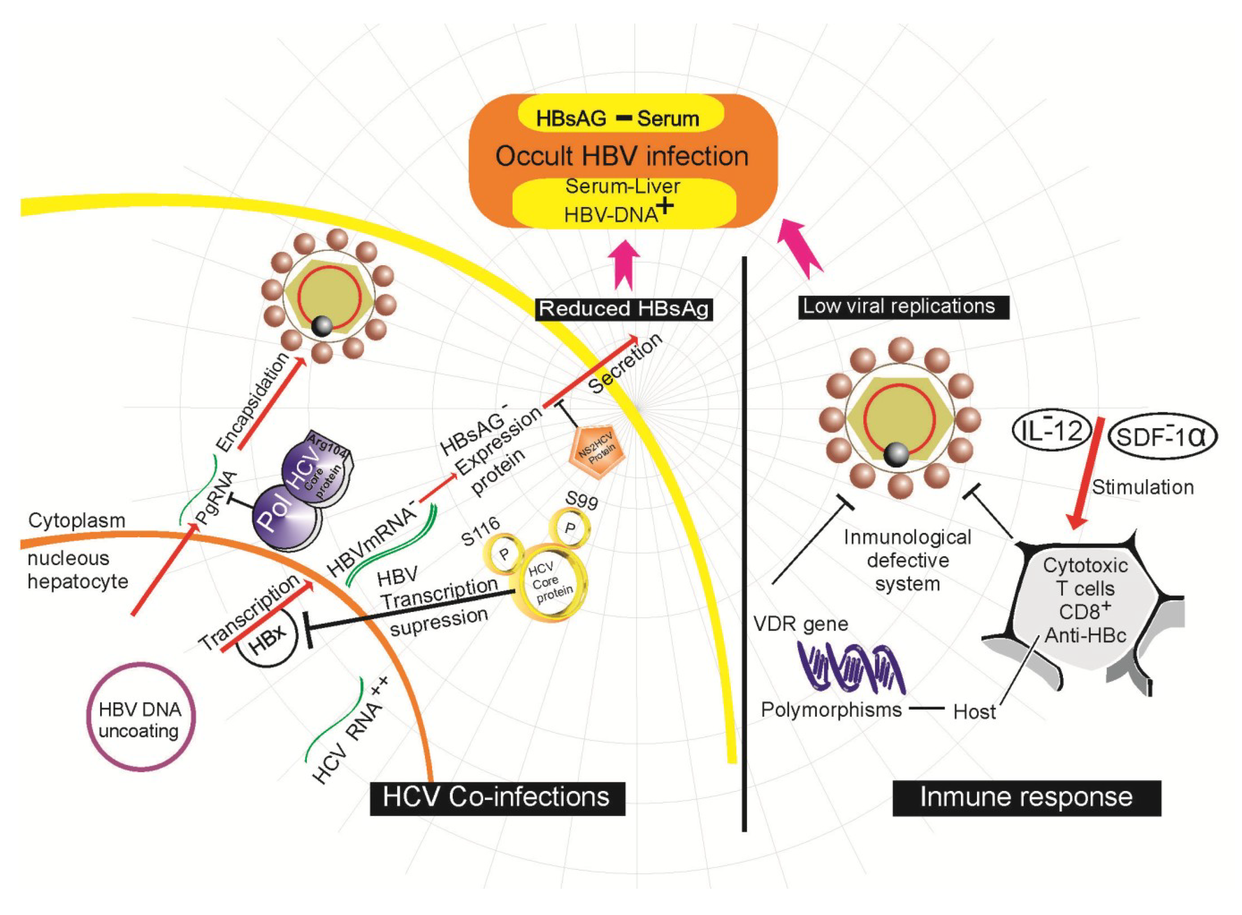 hbv research papers Discussion we broadly discuss the needs for three major public health approaches first, an effective vaccine exists for hbv and mass‐vaccination campaigns.